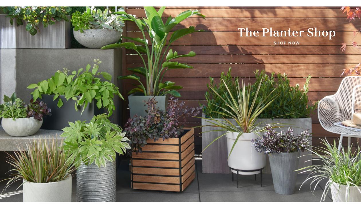 Shop Planter Shop
