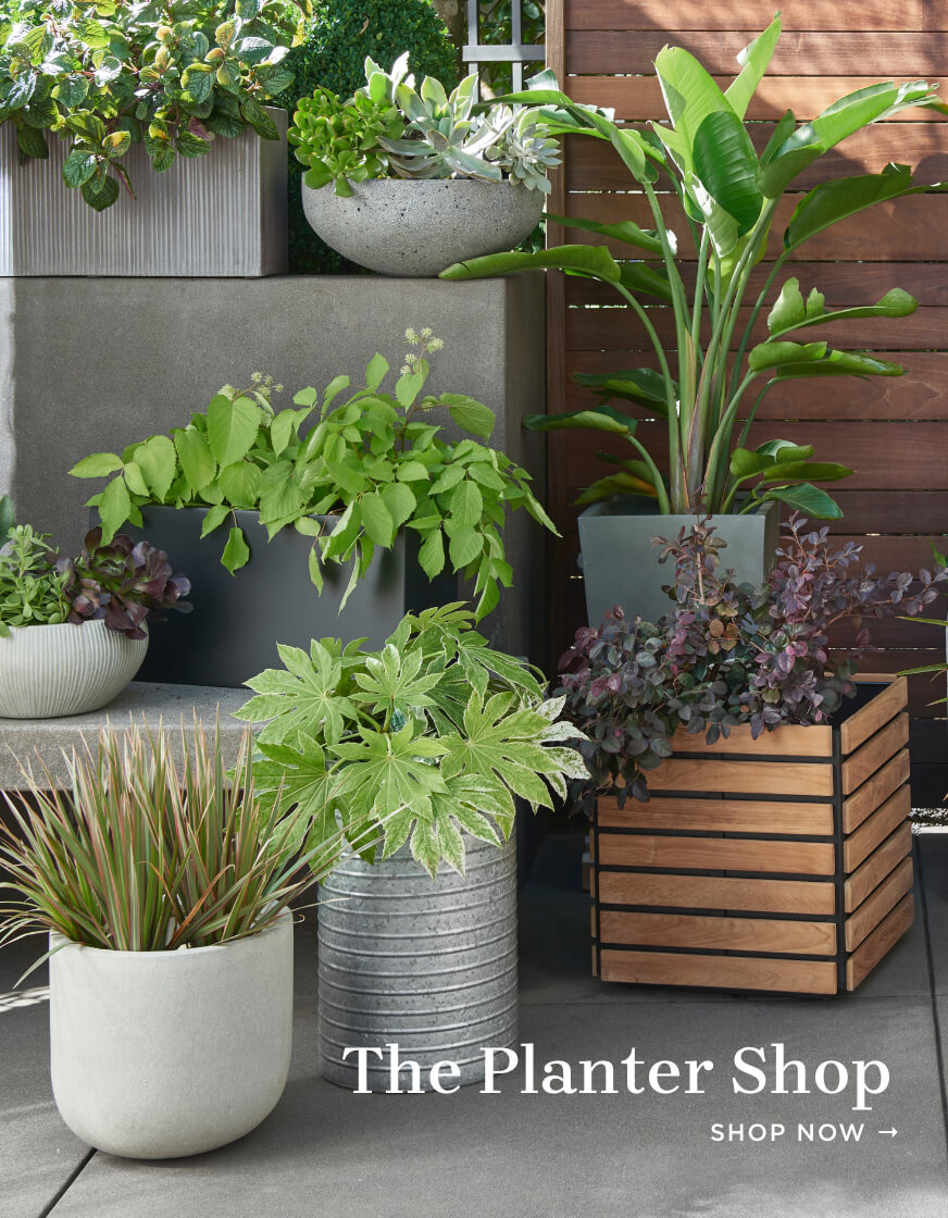 Shop Outdoor Planters
